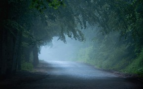 Picture road, trees, fog
