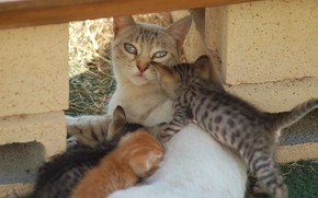 Picture kids, lying on his side, cat with kittens