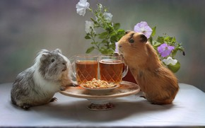 Picture flowers, beer, glasses, a couple, feast, nuts, peanuts, Petunia, rodents, Guinea pigs