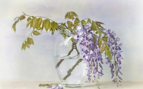 Picture leaves, water, flowers, branches, bouquet, transparent, petals, art, vase, still life, painting, light background, lilac, …