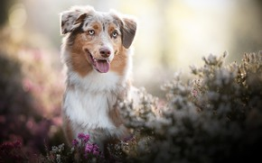 Picture nature, each, dog, spring