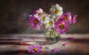 Picture flowers, bouquet, pink, white, vase, kosmeya, cosmos