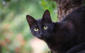 Picture cat, cat, look, drops, pose, green, background, black, black, green eyes, bokeh