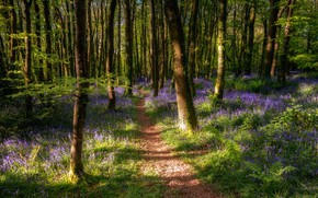 Picture forest, nature, spring