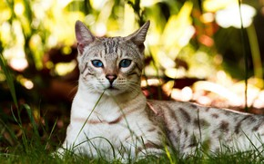 Picture grass, cat, look