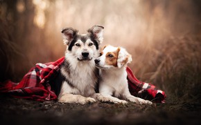 Picture plaid, a couple, friends, bokeh, two dogs