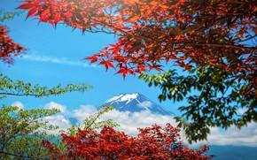 Picture autumn, the sky, leaves, colorful, Japan, Japan, red, maple, mount Fuji, landscape, autumn, leaves, autumn, …