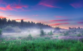 Picture Field, Forest, Morning, Grass, The edge, Tomanec