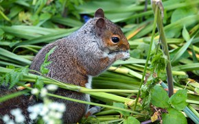Picture grass, protein, rodent