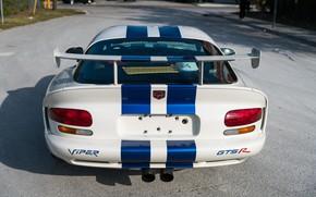 Picture Dodge Viper, 1997, Back, American car, Wing, GTSR, Racing stripes