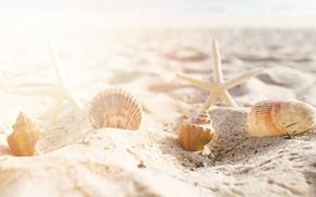 Picture sand, sea, beach, summer, star, shell, summer, beach, sea, sand, starfish, seashells