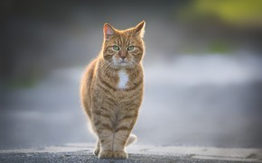 Picture walk, red cat, asphalt road