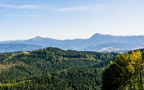 Picture forest, trees, mountains, Ukraine, Goverla, Bukovel, Petros