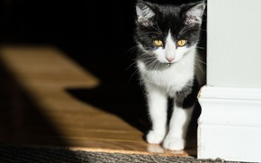 Picture drop, shadow, kitty, cat