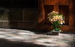 Picture light, flowers, wall, tile, bouquet, shadows, the sidewalk, Alstroemeria