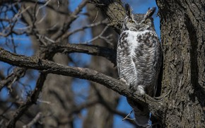 Picture branches, tree, owl, bird, owl