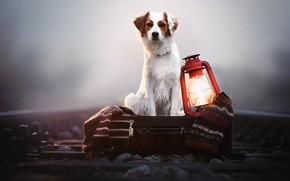 Picture fog, dog, lantern, railroad, plaid, box