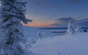 Picture winter, snow, trees, landscape, nature, dawn, morning, The Arctic, Юлия Шумляева