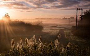 Picture fog, morning, autumn, web