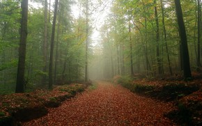Picture road, autumn, forest, trees, foliage, Germany, Germany, Palatinate, Palatinate Forest, The Palatinate Forest, Palatinate