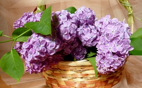 Picture basket, lilac, tulle
