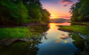 Picture greens, forest, summer, grass, sunset, shore, pond