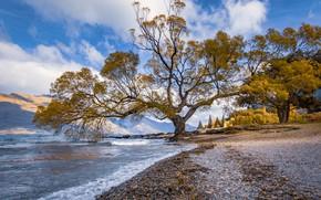 Picture lake, tree, New Zealand, New Zealand