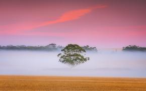 Picture field, fog, tree, dawn, morning, Australia
