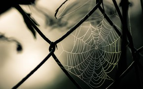 Picture photography, nature, macro, fence, Spider web