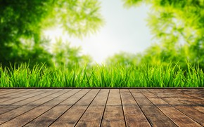 Picture summer, grass, leaves, the sun, green, summer, grass, sunshine, wood, leaves