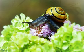 Picture macro, flowers, background, two, snail, snails, petals, green, pair, pink, a couple