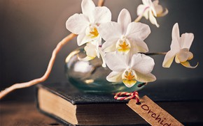 Picture flowers, book, orchids