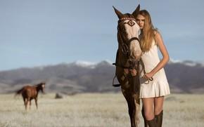 Wallpaper field, horse, Kira, Mark Crislip