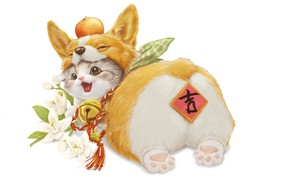 Picture flowers, kitty, play, Welsh Corgi
