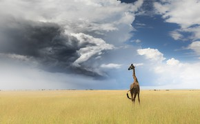 Picture field, the sky, clouds, giraffe