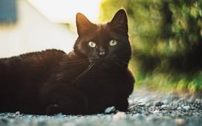 Picture cat, cat, black, lies, bokeh, yellow eyes