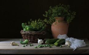 Picture dill, pitcher, cucumbers, garlic, zucchini
