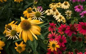 Picture flowers, garden, flowers