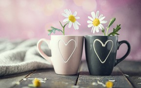 Picture flowers, chamomile, mugs