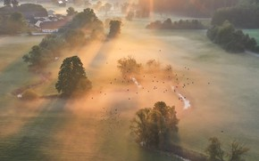 Picture field, birds, nature, fog, morning