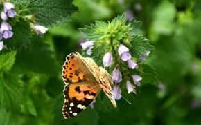 Picture summer, butterfly, flowers, nature