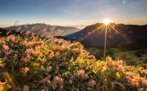 Picture summer, the sky, the sun, rays, sunset, flowers, mountains, dawn, hills, Asia, pink, the bushes, ...
