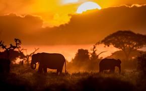 Picture sunset, elephants, Kenya
