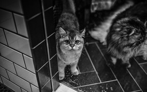 Picture cats, tile, black and white