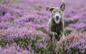 Picture face, mood, dog, walk, Heather