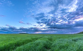 Picture field, summer, the sky, grass, clouds, meadow, space