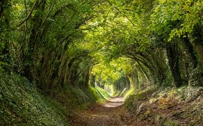 Picture trees, the tunnel, Chichester, West Sussex, Halnaker, England.