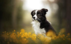 Picture flowers, dog, puppy, bokeh
