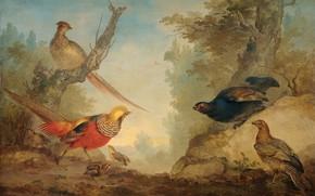 Picture birds, oil, picture, canvas, Pheasants, ERT Schumann, 1760, Aert Schouman