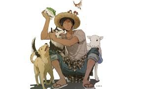 Picture dogs, birds, box, hat, Kuroko's Basketball, Kuroko from the Baske, Amine Dykes